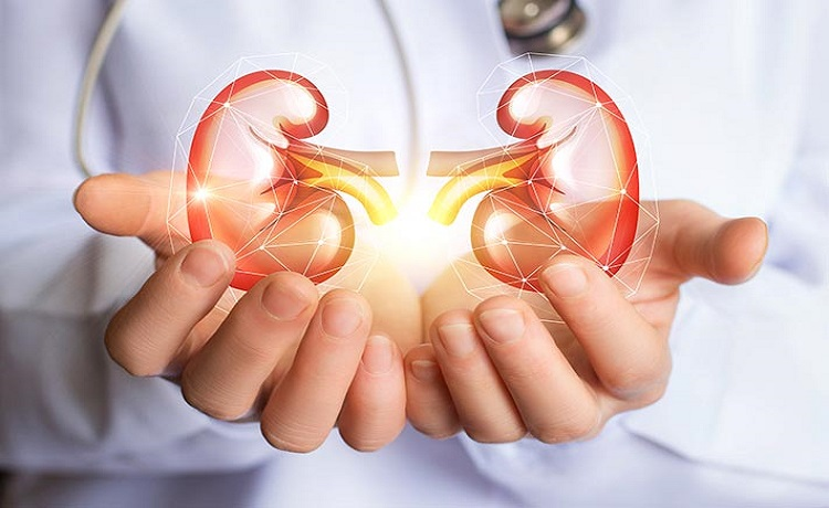 Tested Tips on How to have Healthy Kidneys